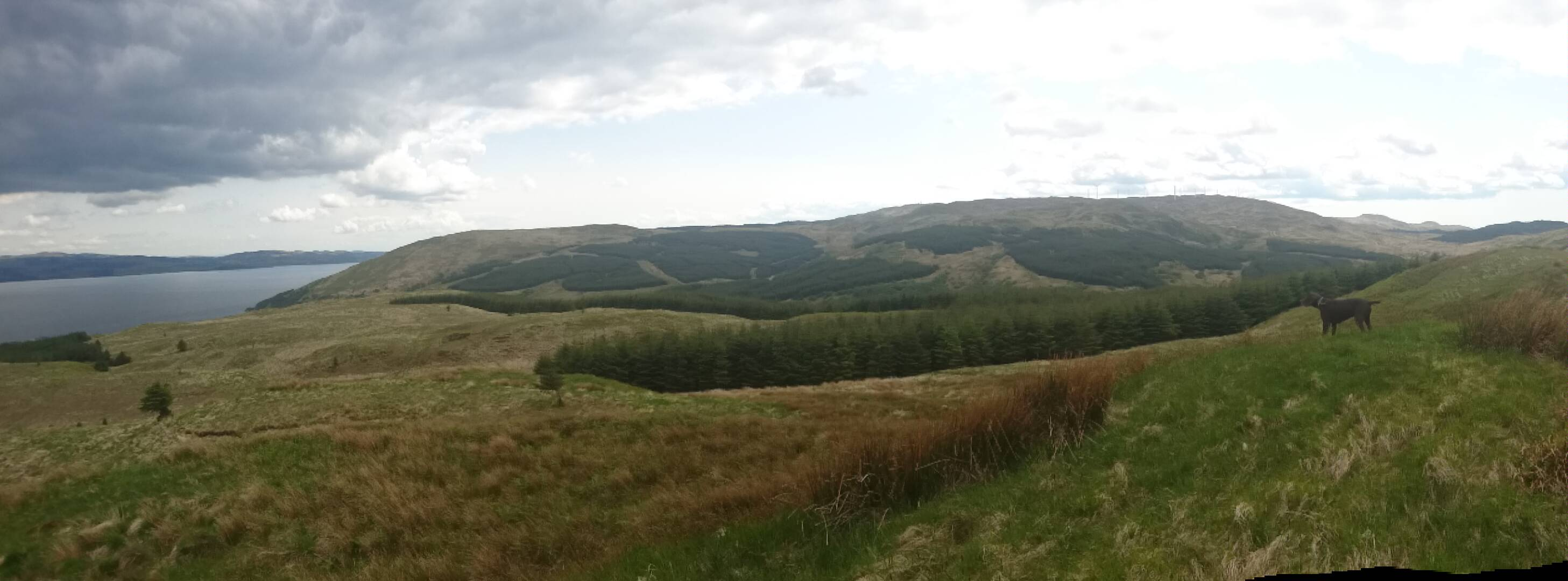 management objectives for a semi natural woodland Issues and objectives the condition and isolation of ancient semi-natural woodlands  to encourage positive and appropriate management of semi-natural woods .